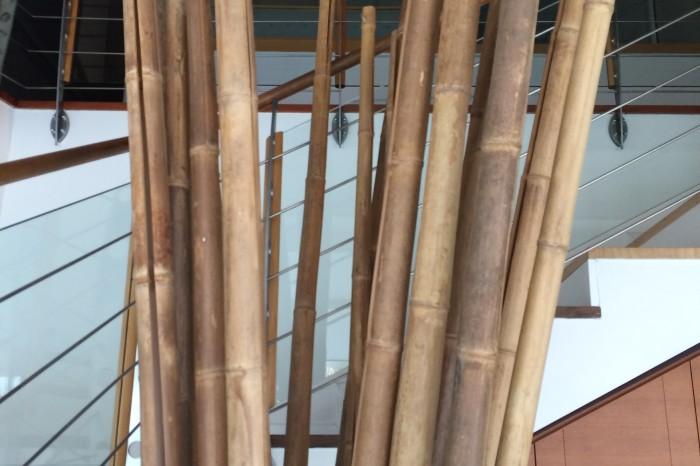 canne bambu'